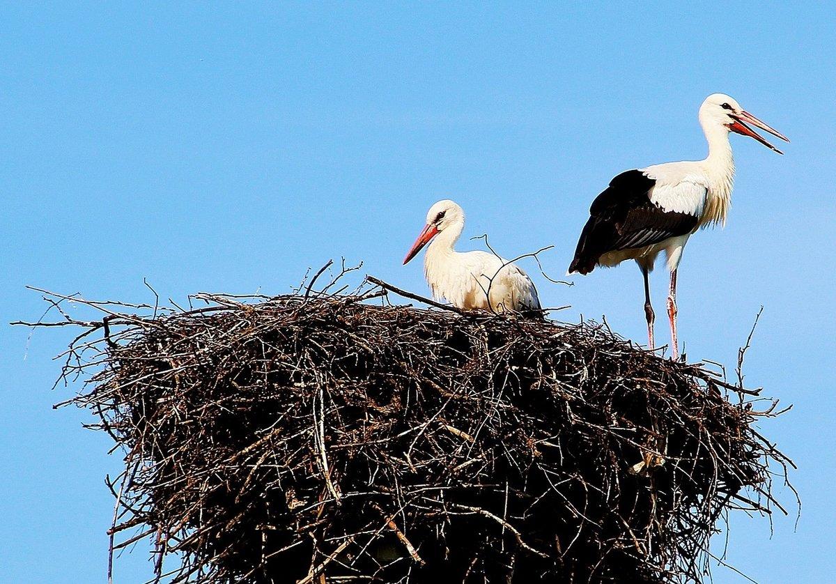 обратной картинка аист в гнезде на дереве что мыслей идей