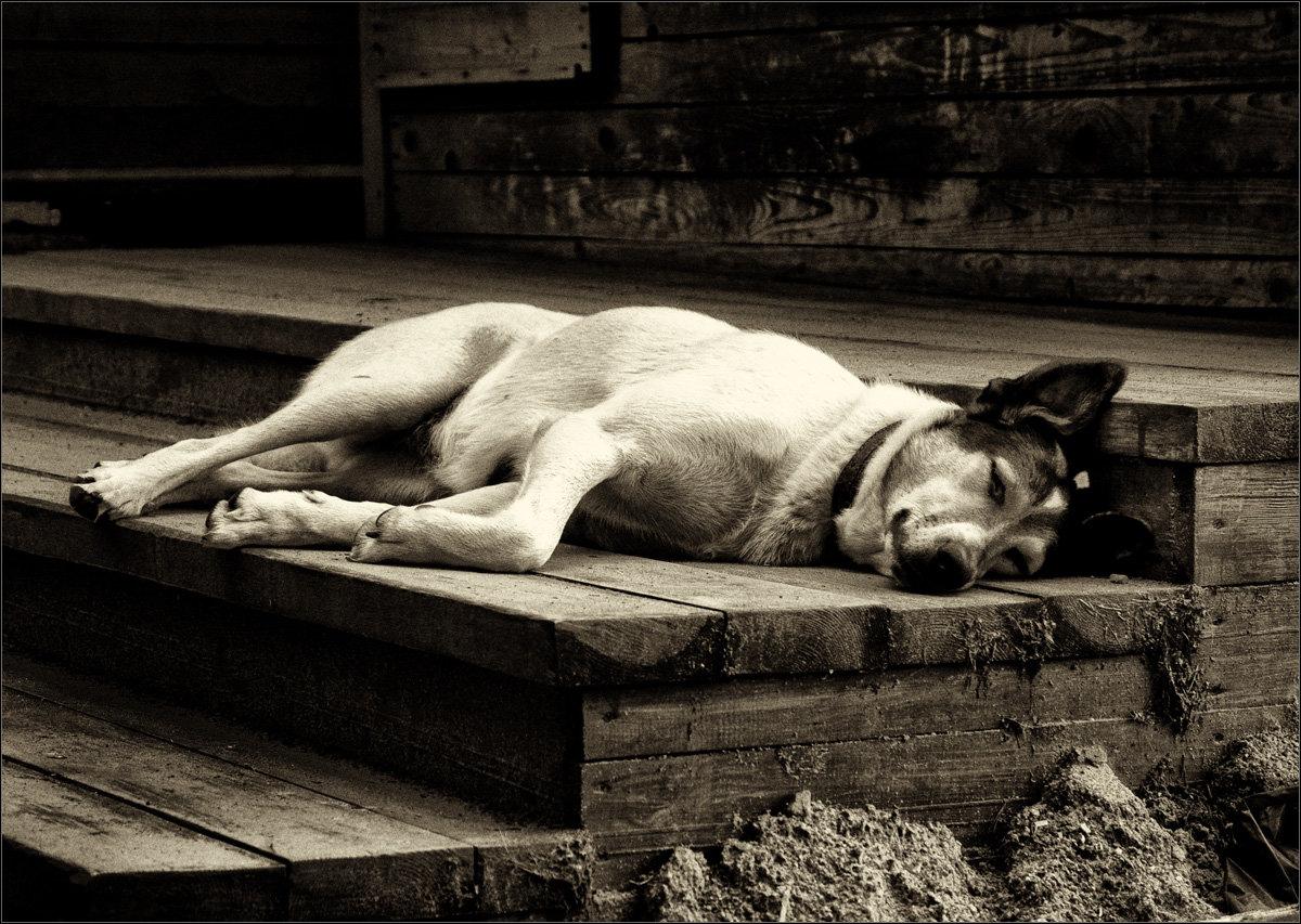 Собака в тоске картинка