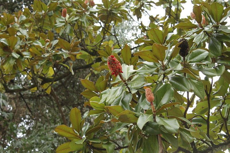 растения абхазии фото с названием мост