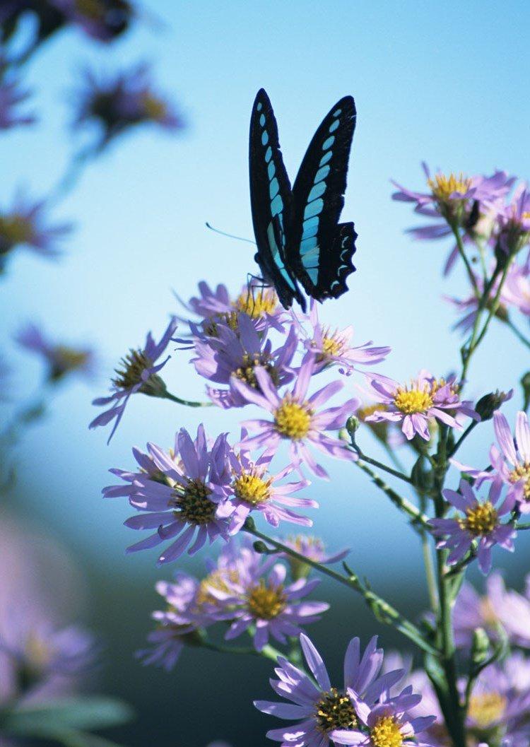 Открытки с бабочками фото, новогодние