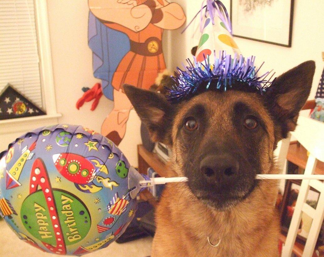 Картинка с собакой на день рождения, картинки для
