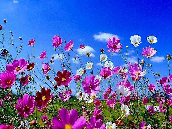 Открытка цветы летние