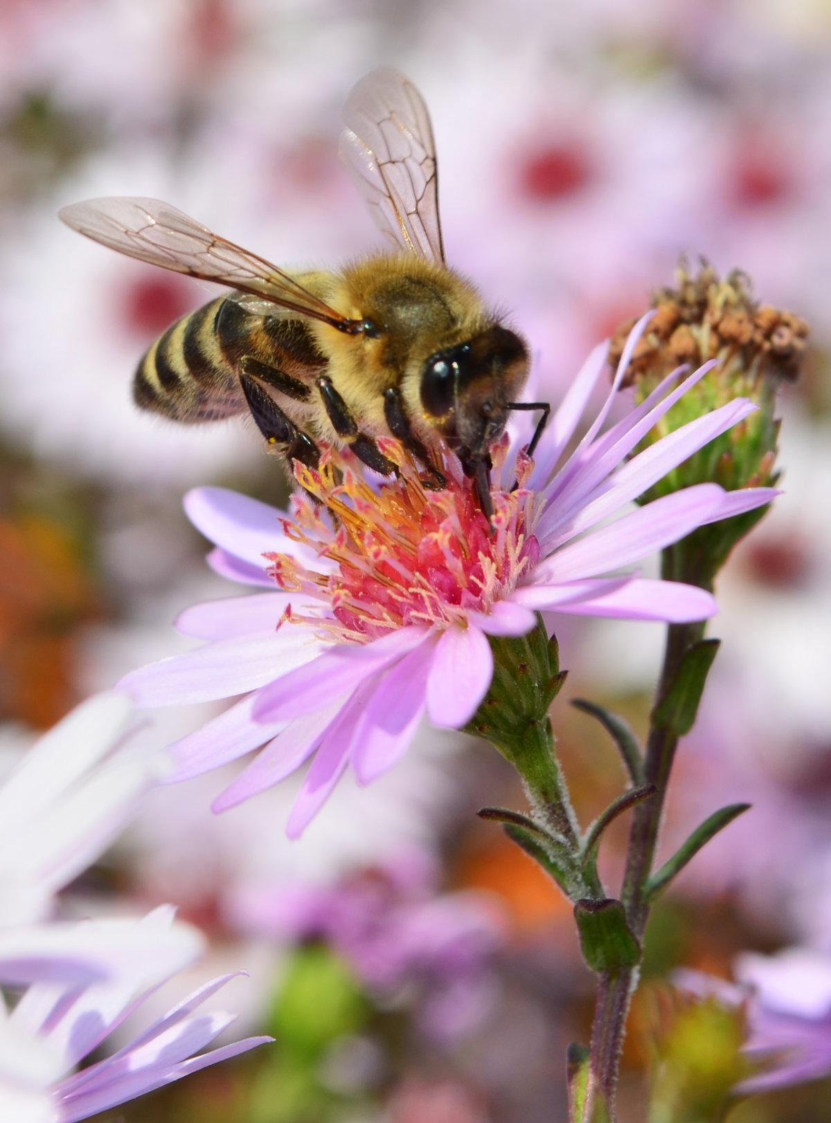картинки пчела на цветочке буквально сразу