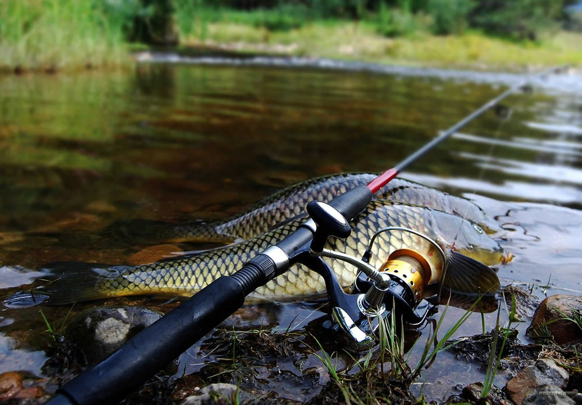 Днем, картинки рыбалки красивые