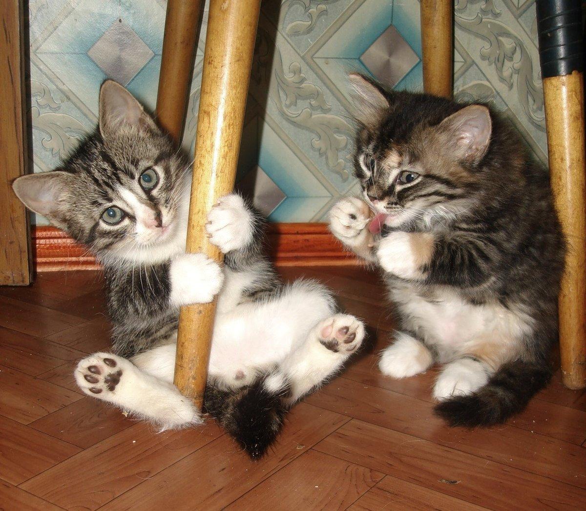Котоматрица картинки прикольные коты