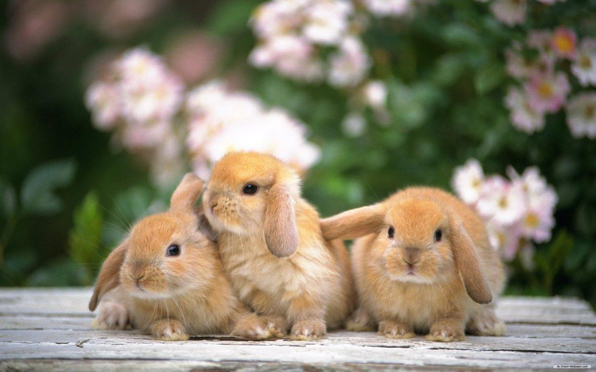 Картинка с зайцем зайцами