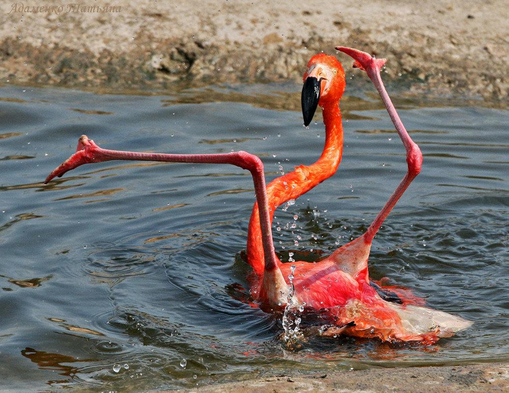 Смешной фламинго картинки, руки держат