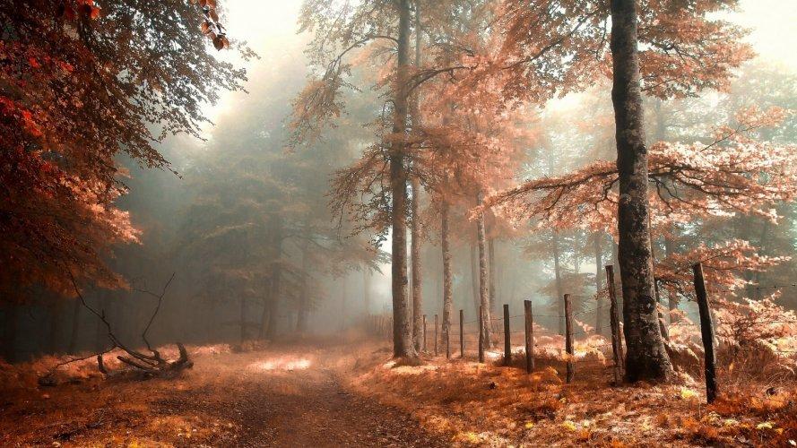 Осенний лес обои