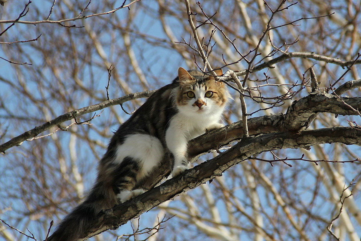 Картинка кот март