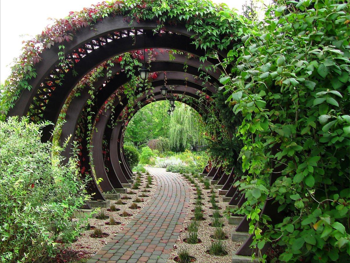 виноградные арки фотогалерея интернет