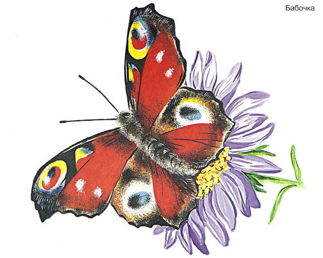 Картинки бабочка на цветке для детей