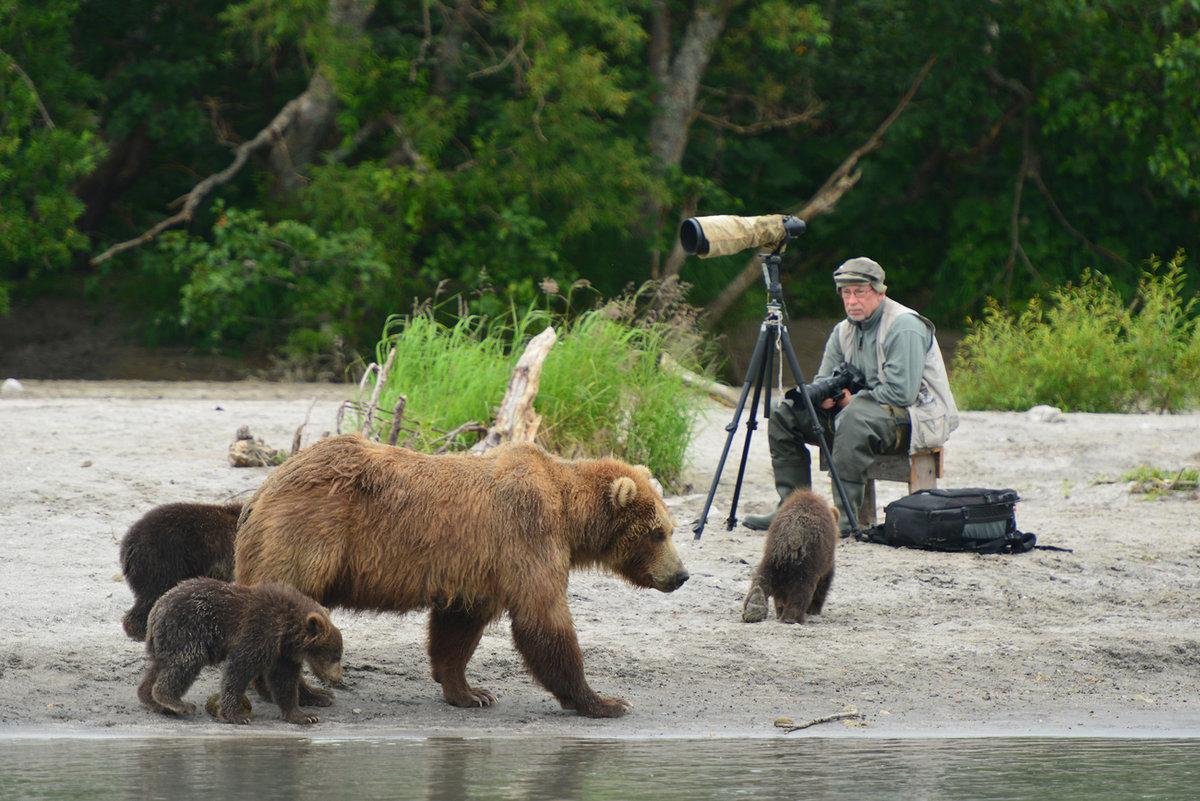 Анималист за работой.#камчатка #медведь
