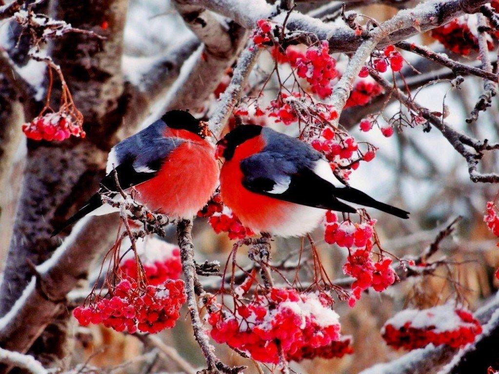 Картинки зима в лесу с птицами