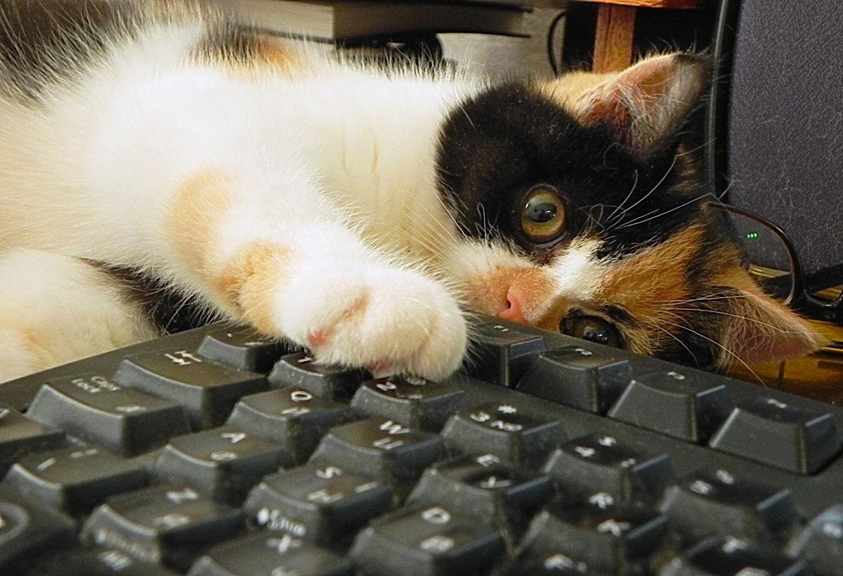 прикольный котик картинка для клавиатуры фото