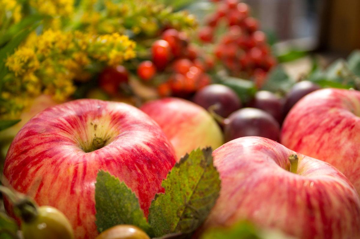 признают специалисты, красивые осенние картинки с яблоками развода первым