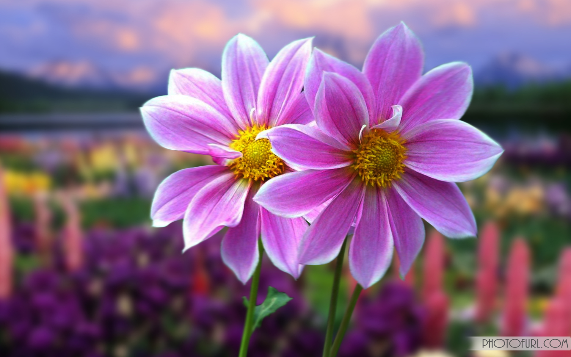 100 Pictures Of Beautiful Flowers Wallpaper Beautiful Color Card