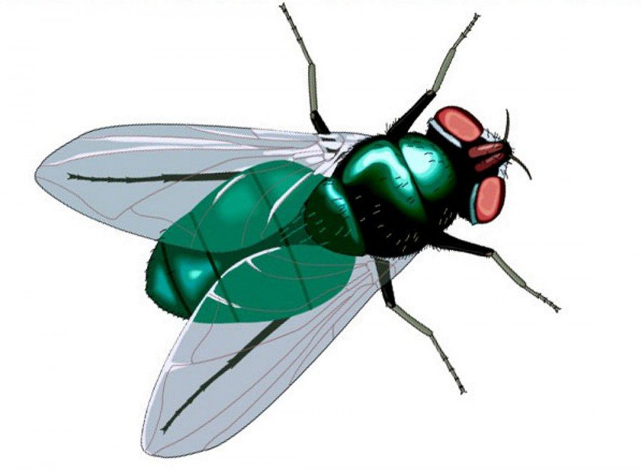 или рисунок с мухами задались
