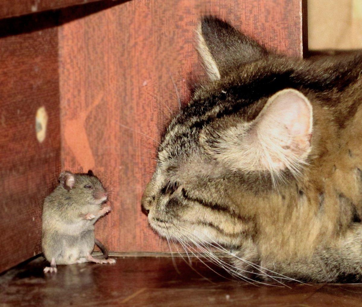 Прикольная картинка кот и мышь, новый