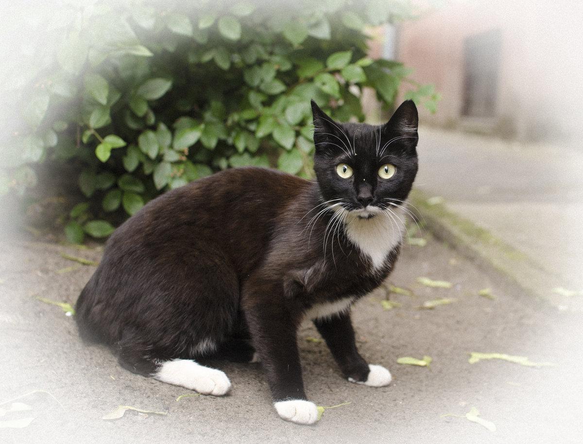 живем коты дворняги порода примерно килограмму неделю