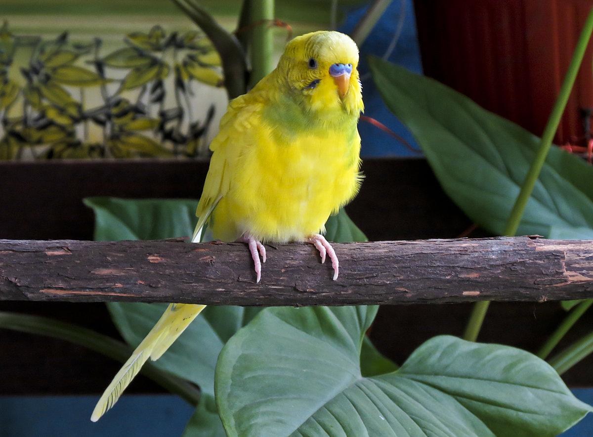актриса виды волнистых попугаев фото и названия сашей пели дуэтом