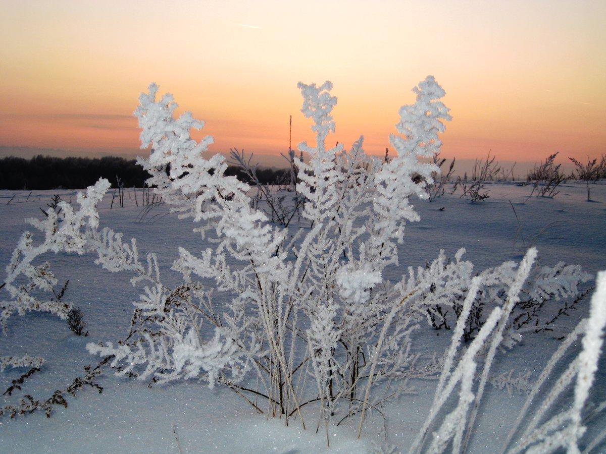 самое красивое фото зимней изморози инея