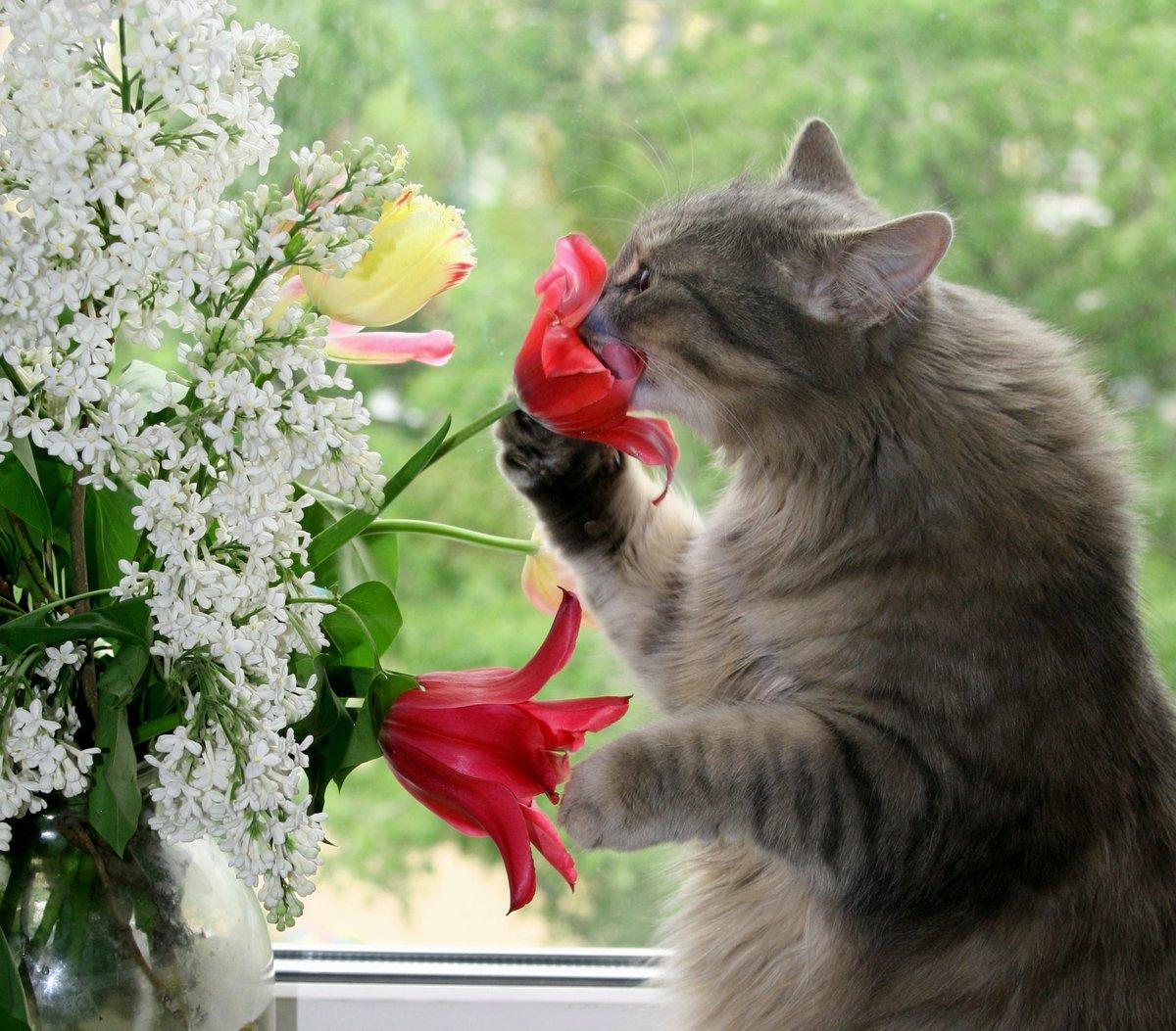 Цветы звери букеты цветов новочеремушкинской москва