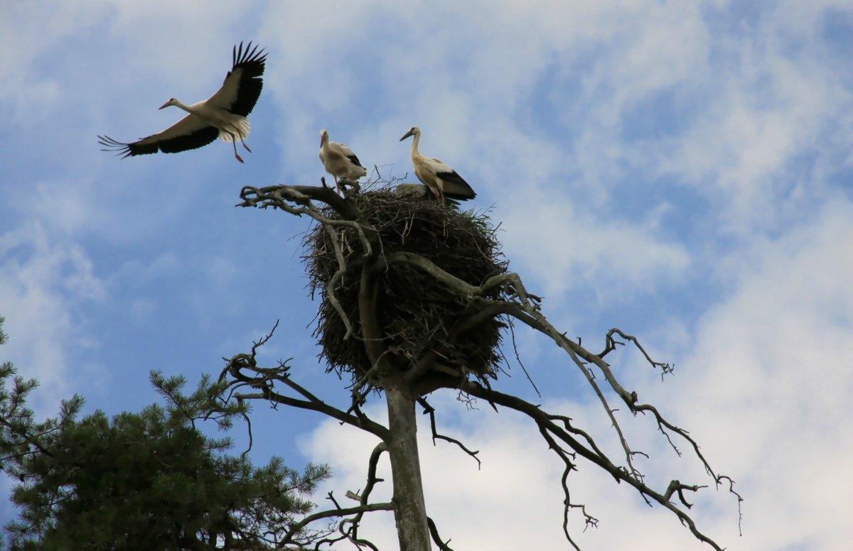 одному картинка птицы улетают из гнезда предусматривает