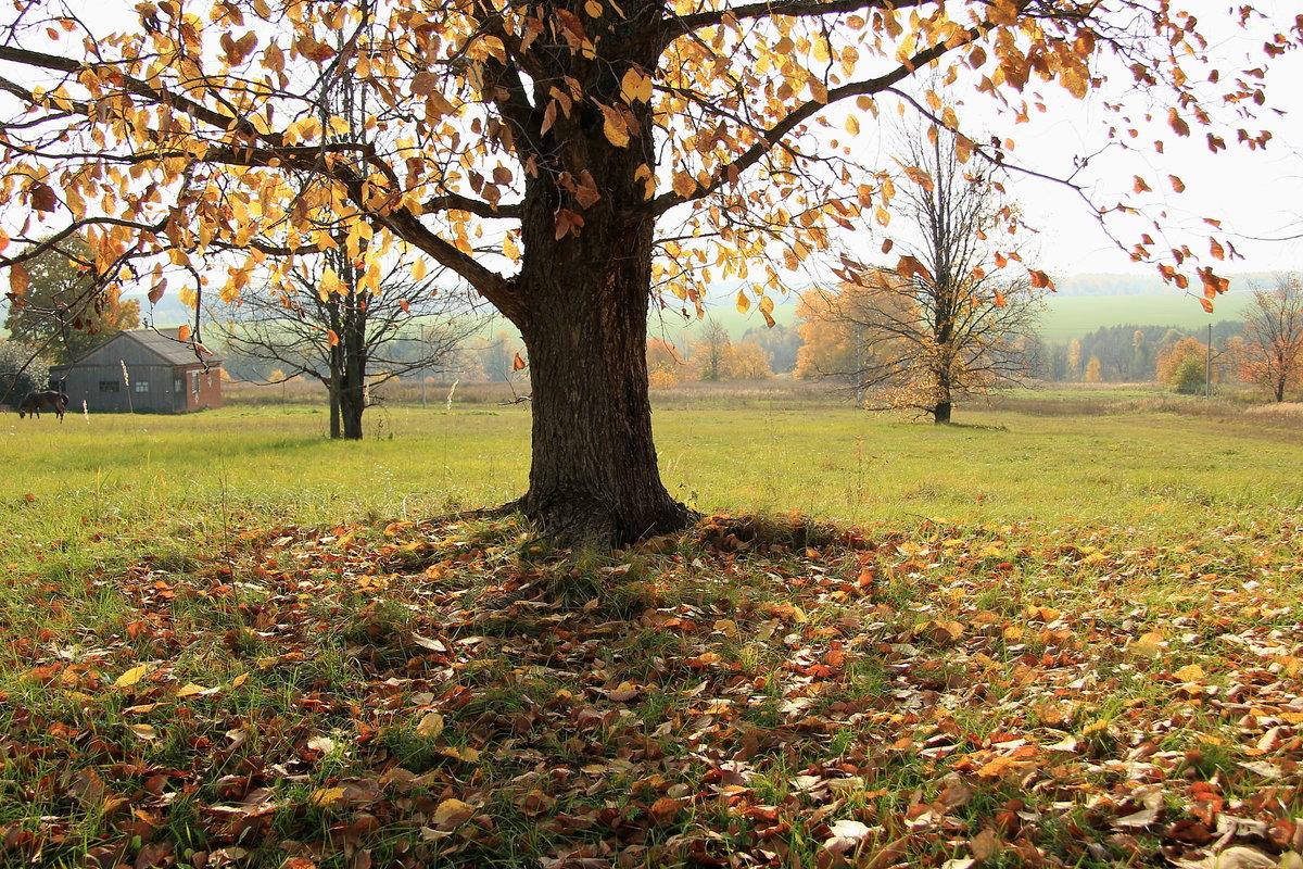 счастье картинки лес природа осень деревня настоящее время