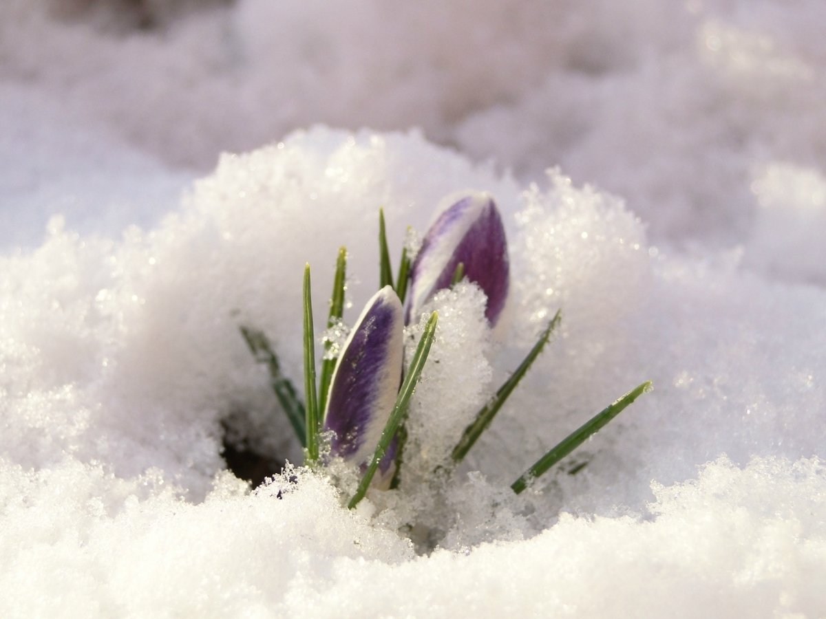 как дыхание весны фото ряде случаев