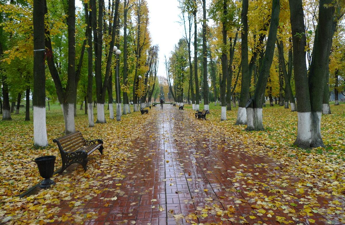 картинка дождя в парке музея под открытым
