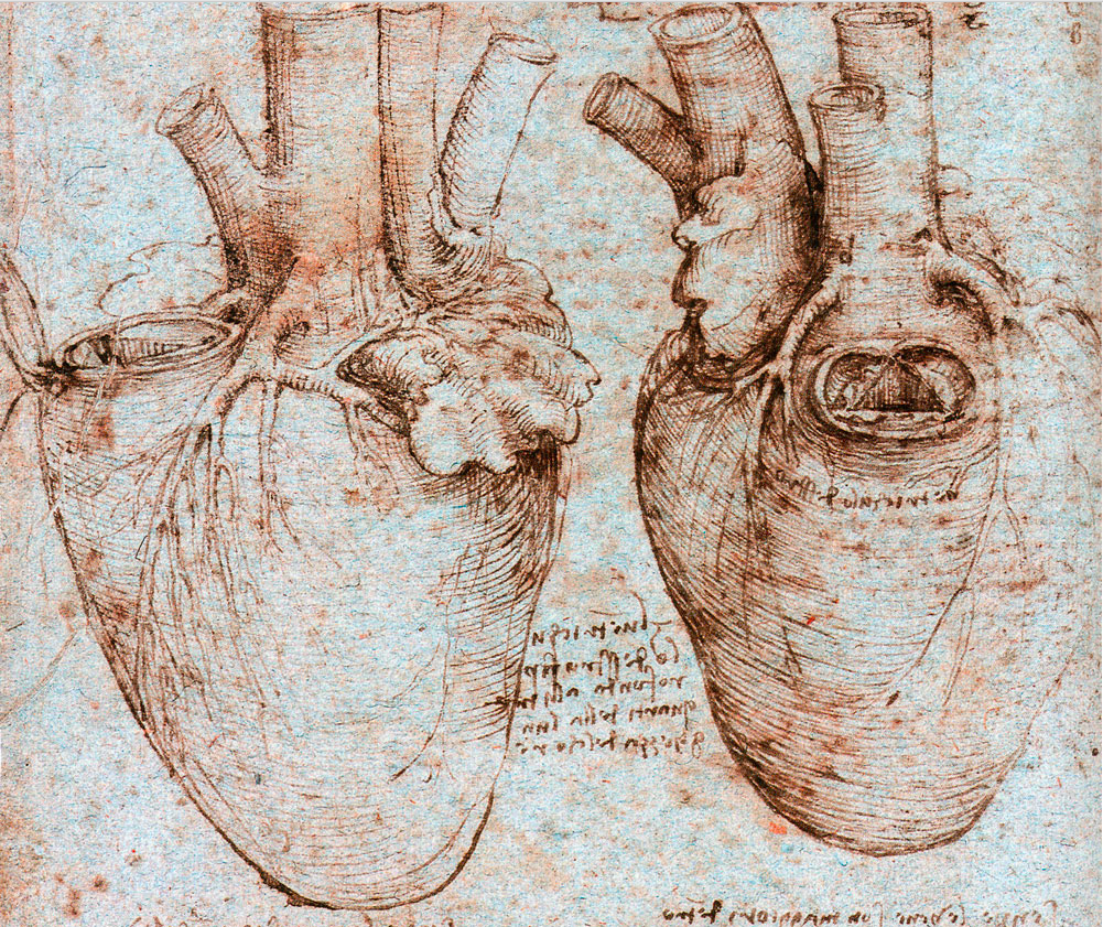 Анатомические картинки леонардо да винчи