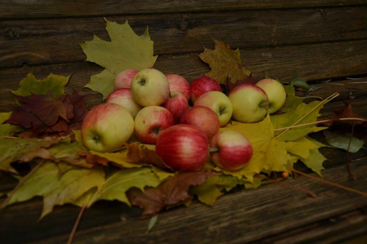 Картинка яблоки осенью
