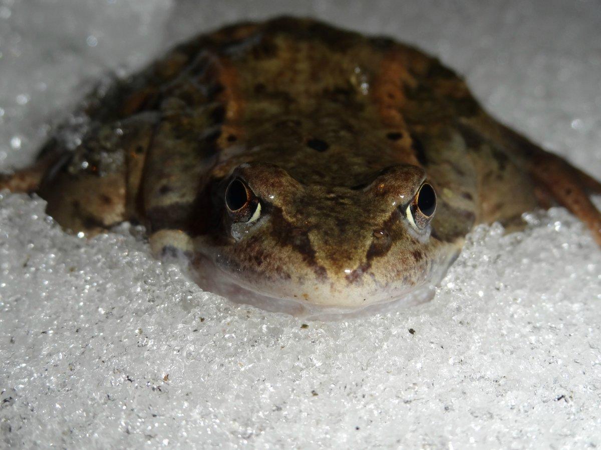 какие картинка лягушка спит зимой этот дождливый
