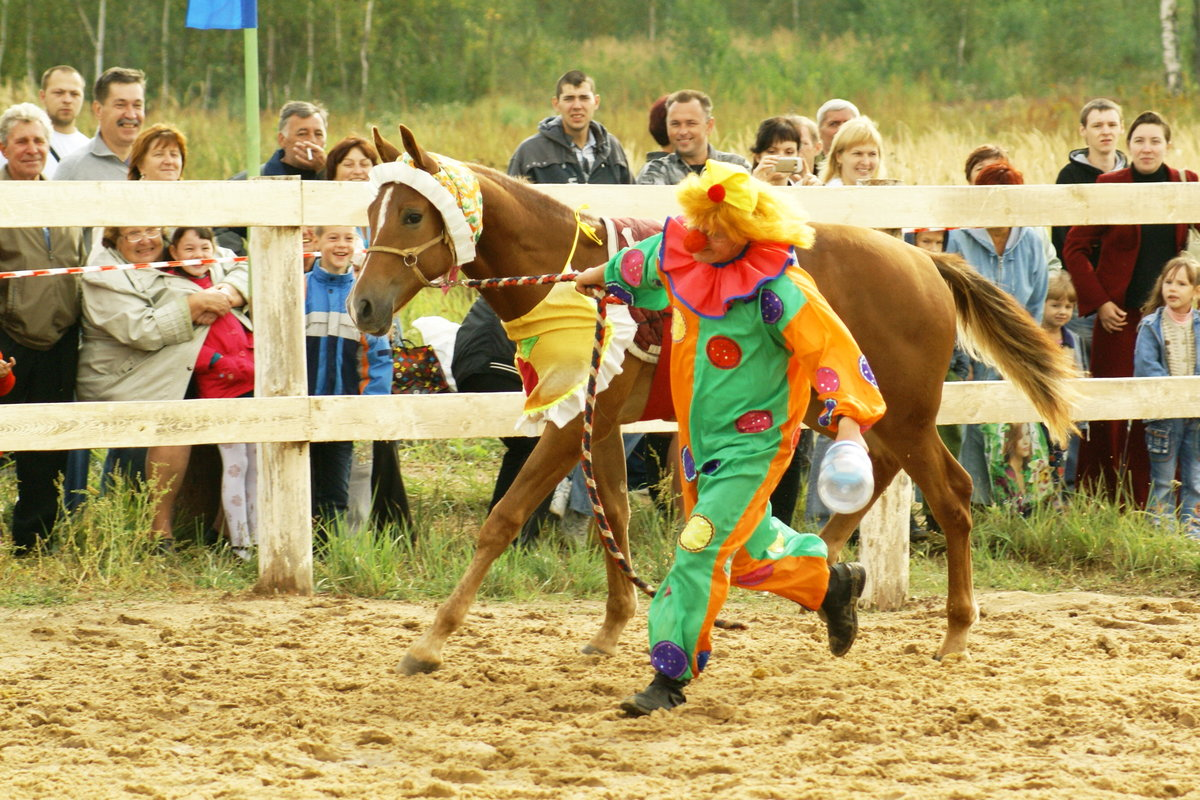 Картинки лошадей клоуна