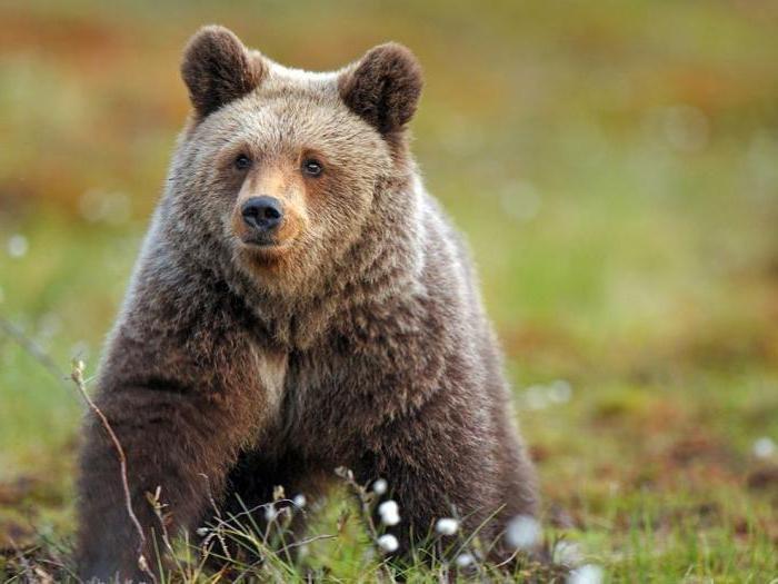 Открытки, картинки животный мир россии
