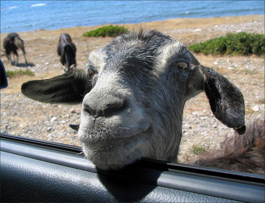 Открытки 1998, прикольные картинки с надписями коза