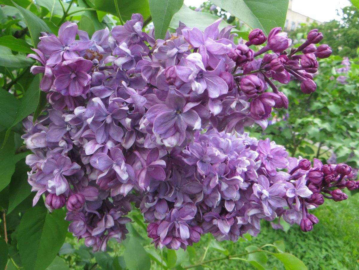 Цветочная коробка защищает нежный цветок, от всякого рода поломок при транспортировки.