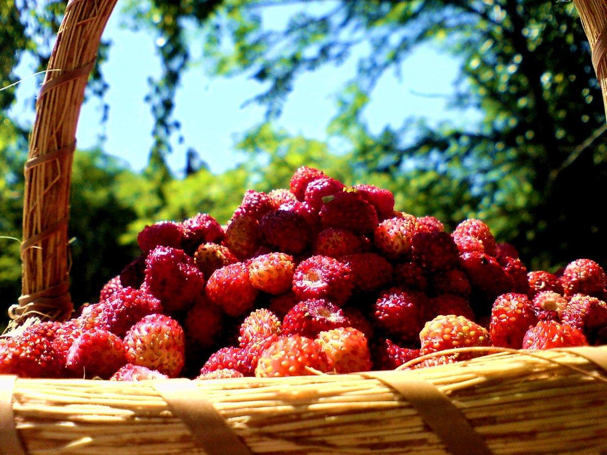 Картинка лето ягоды