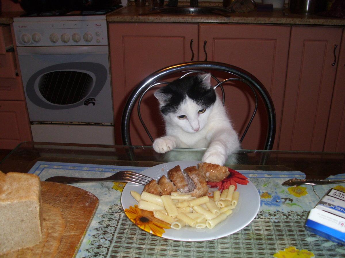 Приколы смешные, картинки кошки пора жрать приколы