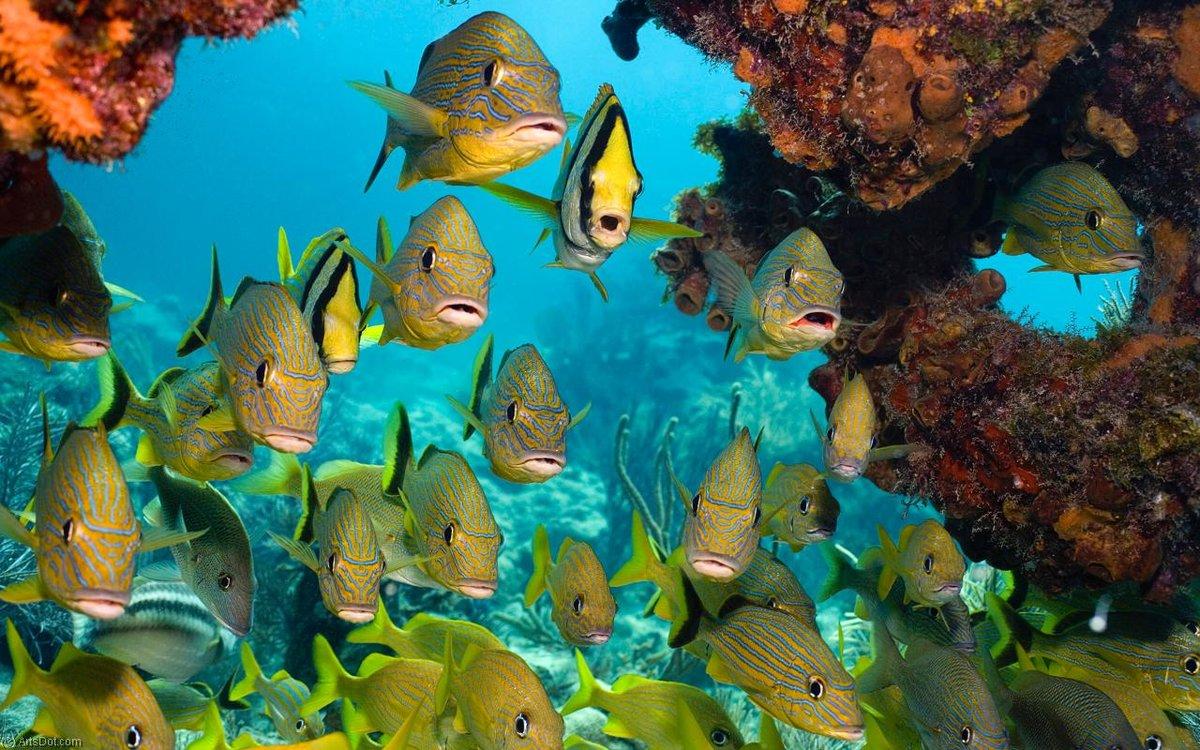 фотографии высокого качества подводный мир что