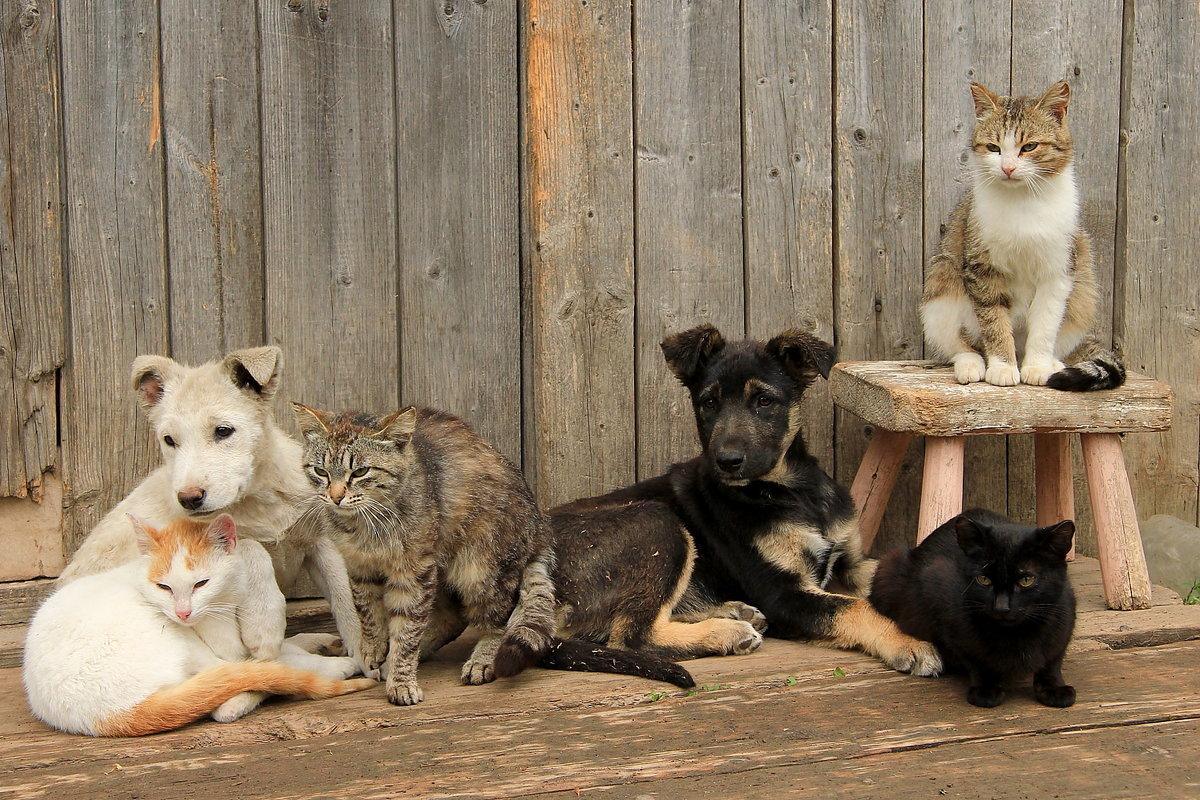 стоит котята в деревне фото ничего стоит