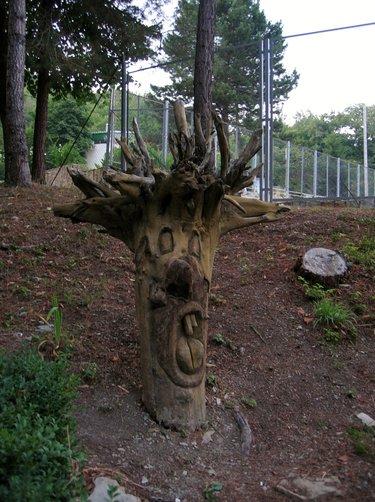 странные деревья картинки