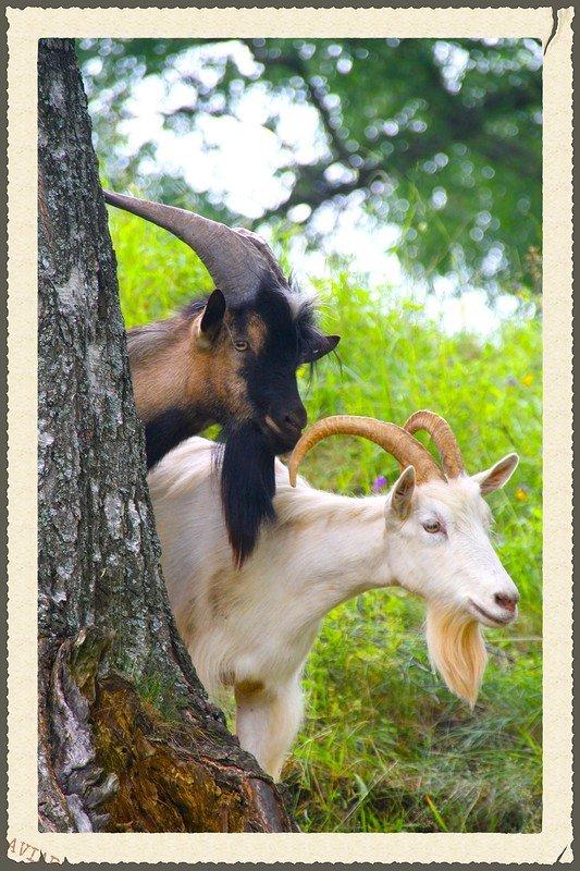 Картинки с надписью ты коза, поздравления днем медика