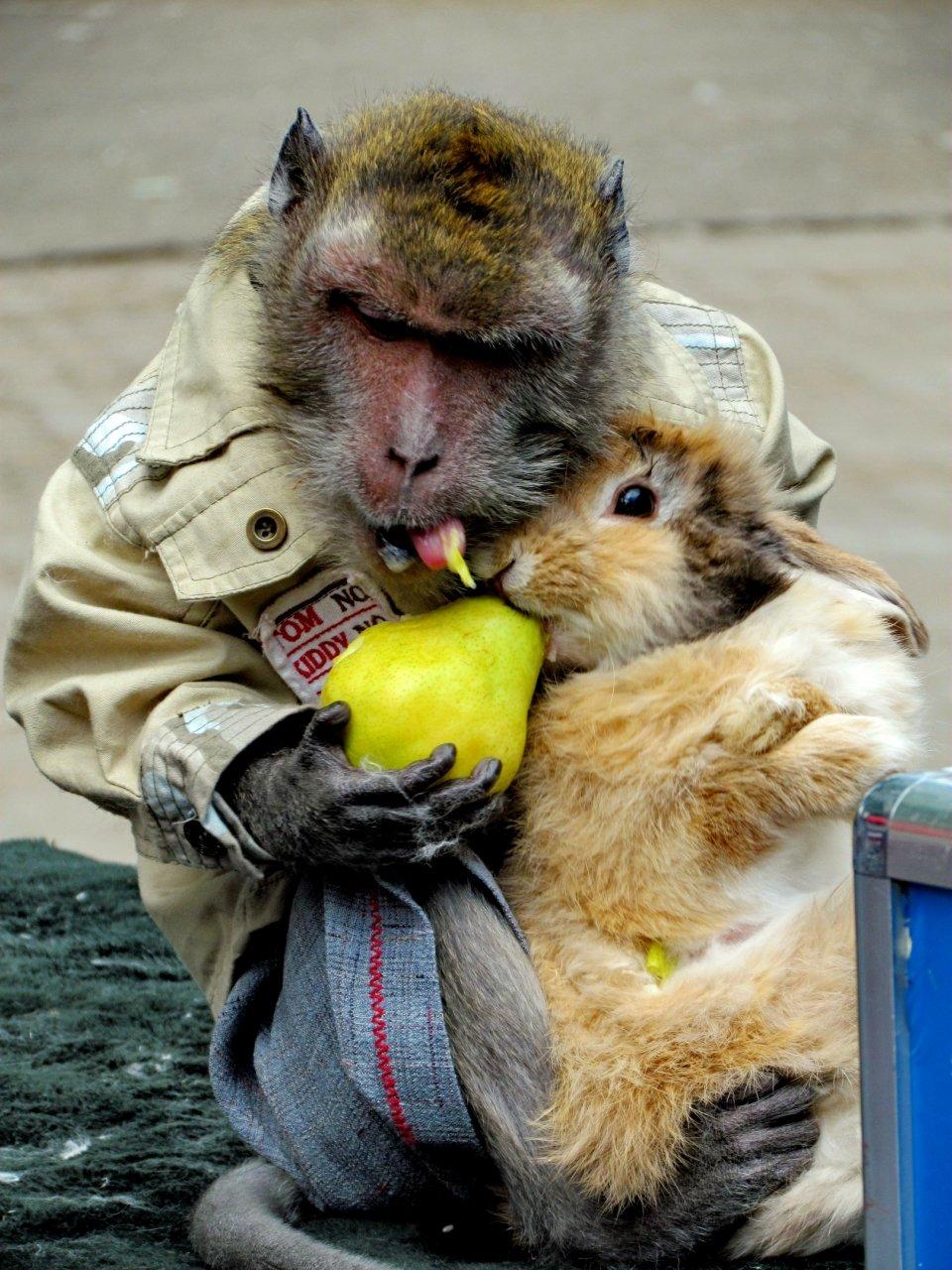 веселые картинки обезьяны под названием зайка