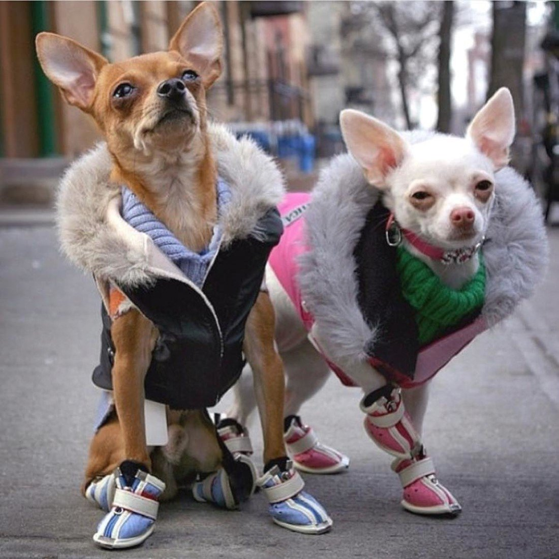 Марта поздравления, картинка смешная собака в одежде