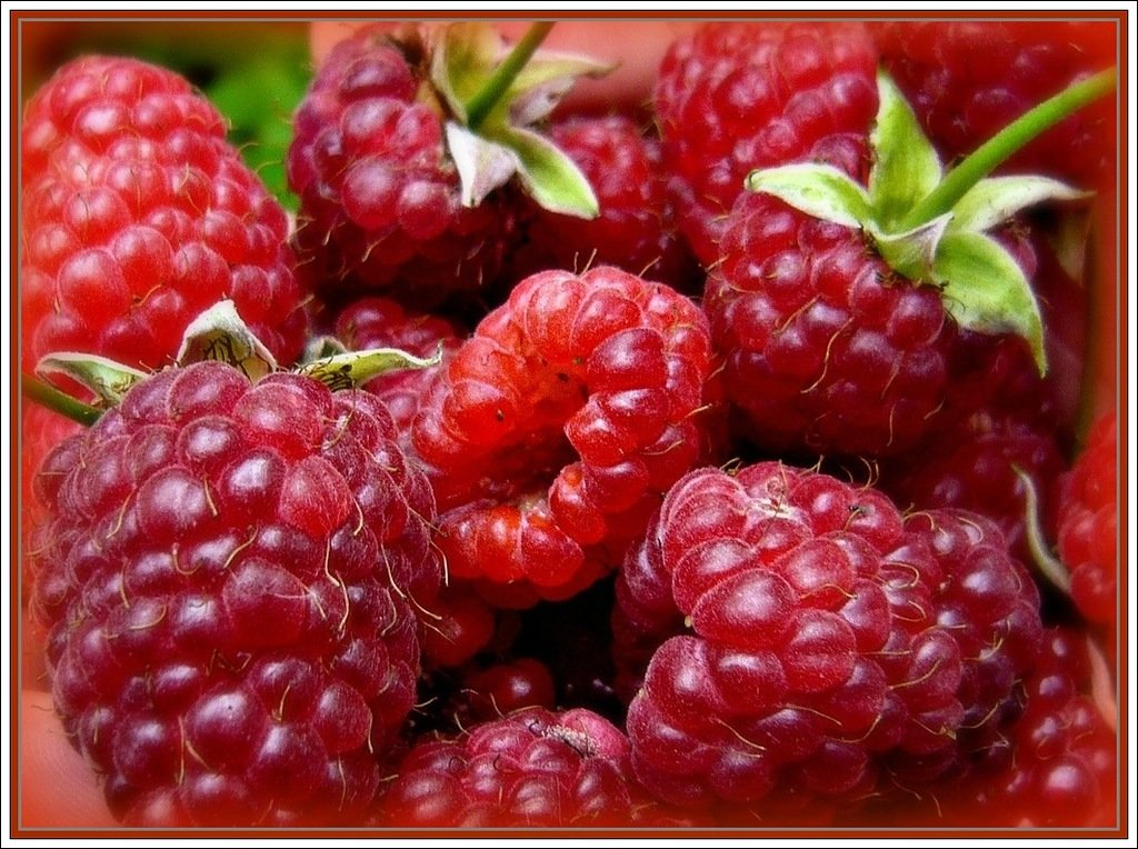 Маленькие картинки ягоды малины