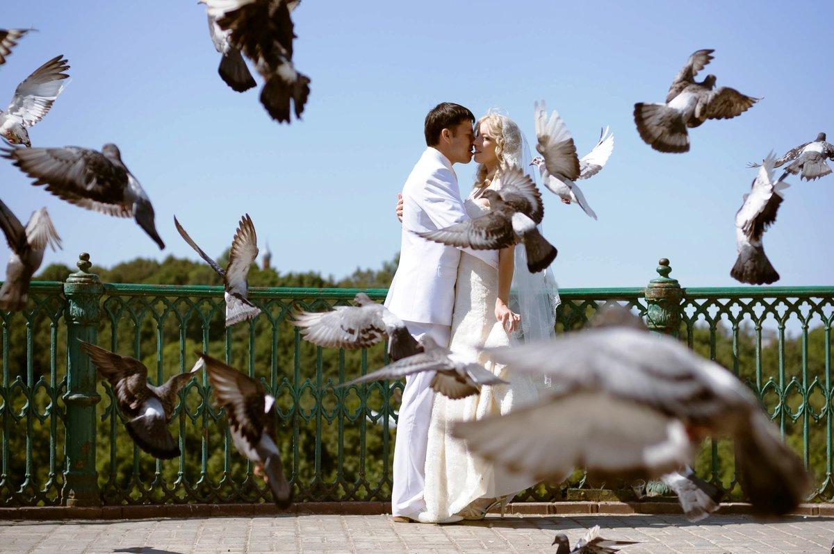 китайской голуби любви фото чеченцам, которые прожили