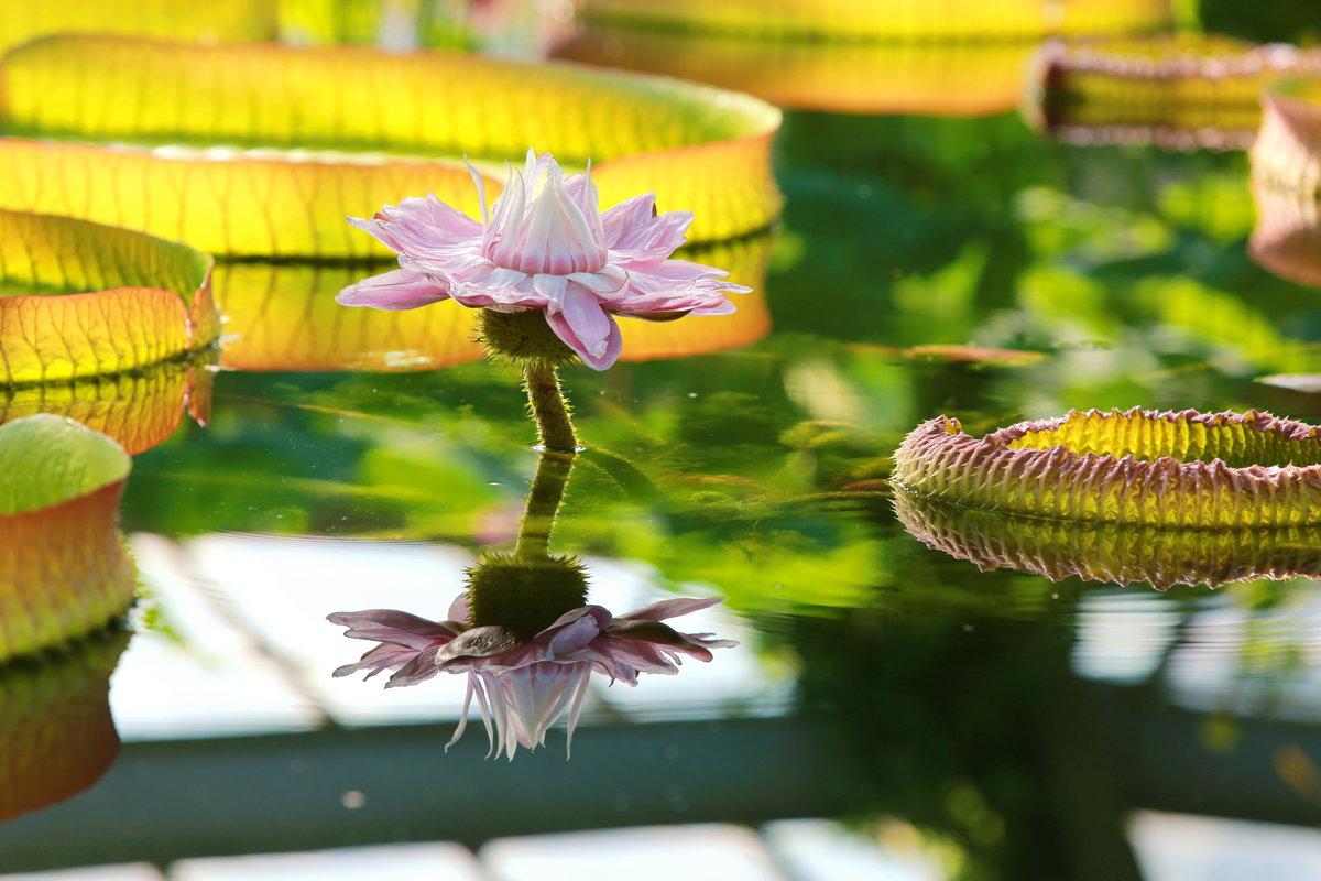 Цветы виктория фото