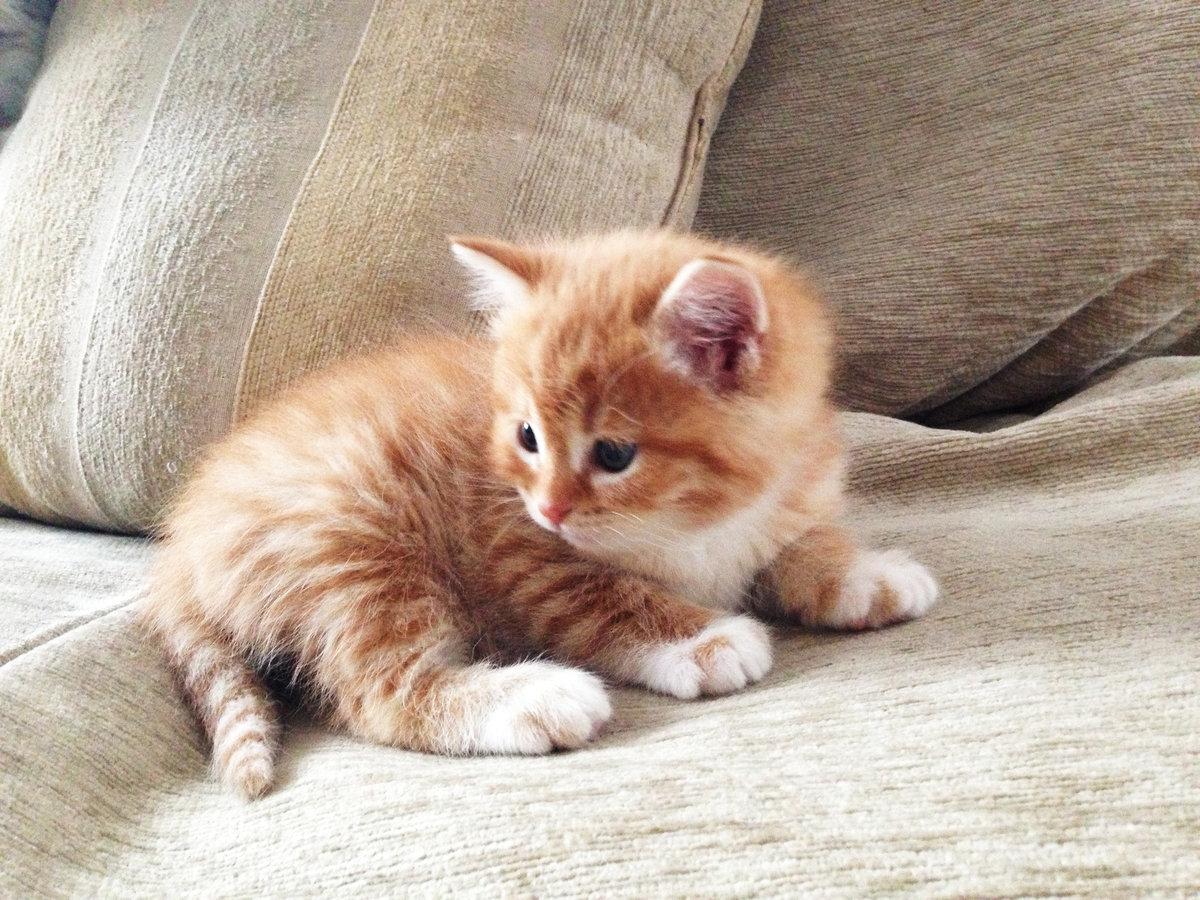 Картинки надписью, картинки рыжие котята