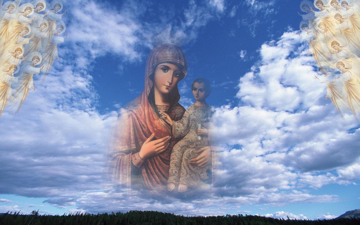 петербургской божественные картинки на рабочий цветочный фон скачать